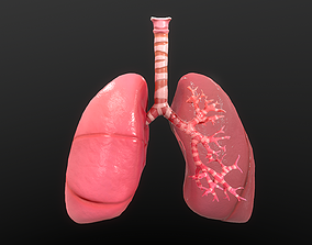 Respiratory System 3D model game-ready