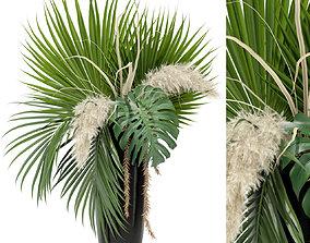 3D Plants collection 368