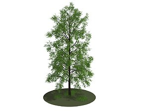 Big tree 3D landscape