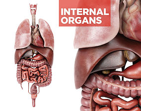 Internal organs - anatomical model with 4K textures