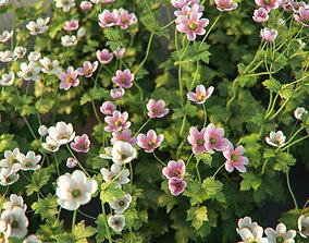 XfrogPlants Anemone Hybrida 3D