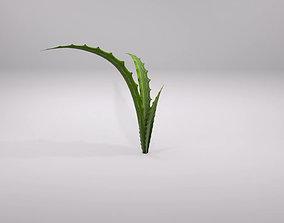 aloe vera plant 3D asset