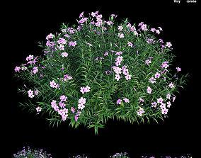3D model Ruellia brittoniana plant set 03