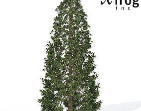 3D model XfrogPlants Southern Magnolia 1