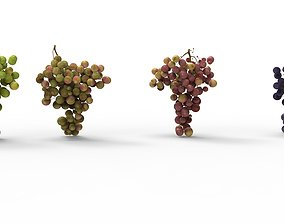 3D asset grape 4 types