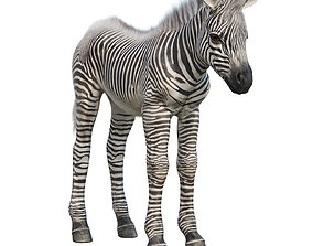 Baby zebra 3D asset game-ready