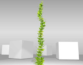 3D model Grapevine Version 3