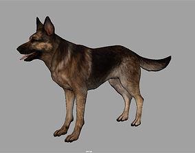 german 3D Shepherd Dog internal organs skelleton