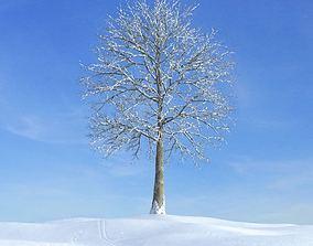 3D model Tree In Snow