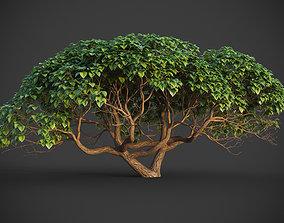 XfrogPlants Hibiscus Tiliaceus 3D model