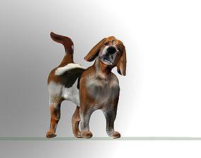 Beagle - dog 3D model