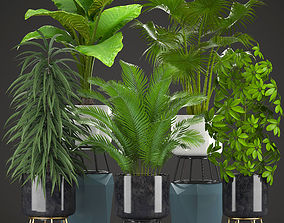 3D model phoenix Collection plants