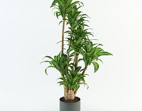 Palm tree in flowerpot 3D