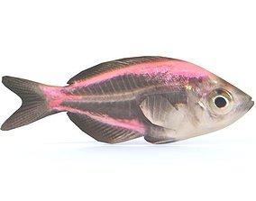 3D asset Crystal Catfish