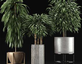 Plants Collection 12 3D