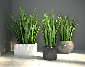 3D grass in pot
