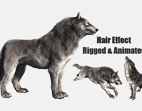 3D wolf wild dog husky beast howl hair