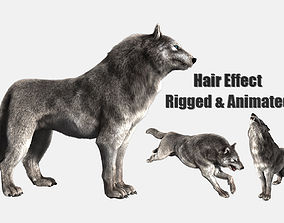 wolf wild dog husky beast howl hair 3D cat