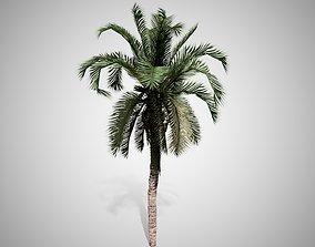 3D model Date Palm Tree