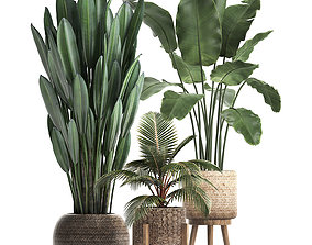Collection of Exotic Plants 400 3D model