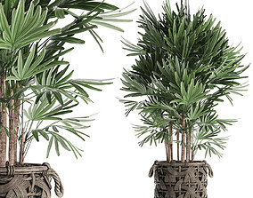 Palm tree Rhapis for the interior in basket 665 3D model