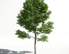 3D Tree 28 amce1