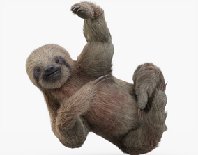 3D asset Sloth Rigged with Fur
