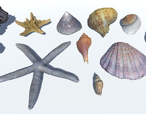 Seashells and Starfishes Vol 2 3D asset