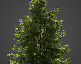 2021 PBR Japanese Helmock Collection - Tsuga 3D model 1