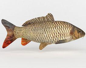 Carp Fish 3D