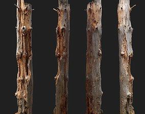 Dead tree 3d scan wood