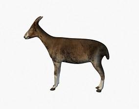 3D Low poly goat