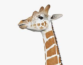 3D Giraffe Head