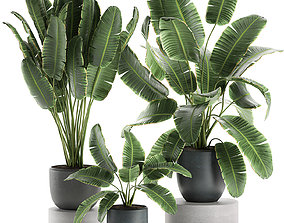 Decorative banana palms in flower pots for the 3D model 1