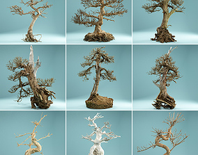 9 RAW SCAN Dead Bonsai Tree High Poly 3D
