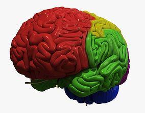 Human Brain Regions 3D