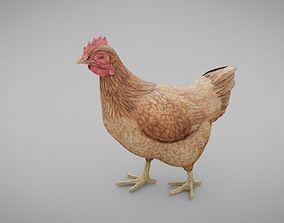 Chicken Pecking 3D asset