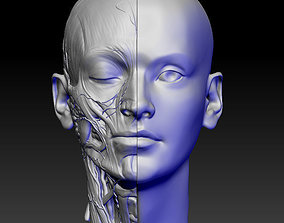 anatomy of the head 3D print model structure
