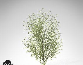 XfrogPlants Purple Willow 3D model