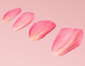 3D model Petals pack
