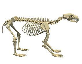 Anatomical Bear Skeleton 3D model