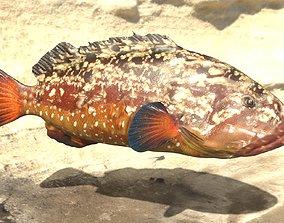 Grouper photorealistic sea fish 3d model Rigged animated