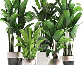 3D model Exotic plants banana tree set