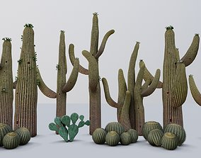 3D model realtime cactus