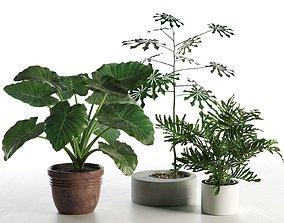 Plants in Pots 3D