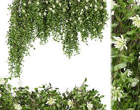 3D Collection plant vol 92