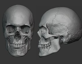 3D Human male skull sculpt