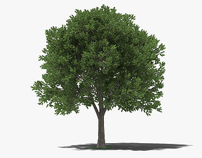 3D model Elm Tree