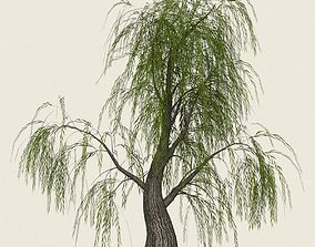 Game Ready Willow Tree 07 3D model