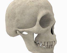 Skull bones 3D